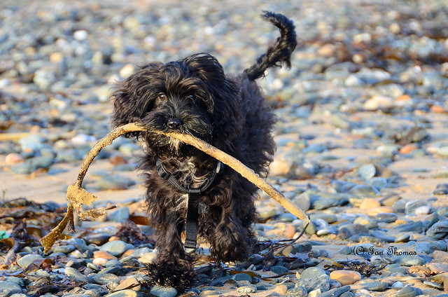 When There Are No Sticks ... Seaweed Will Do ....