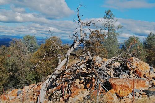 mt autumncolors eldoradocounty aukum vineyardsafterharvest