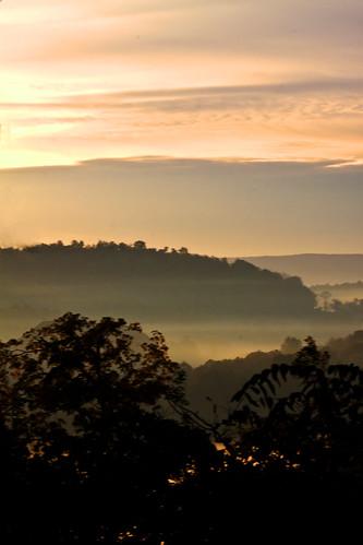 morning trees mist mountains fog clouds sunrise golden morninglight foggy hills hss canoneos50d 70300mmf4f56
