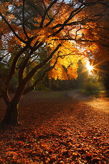 Autumnal glow | by @Gking_photo