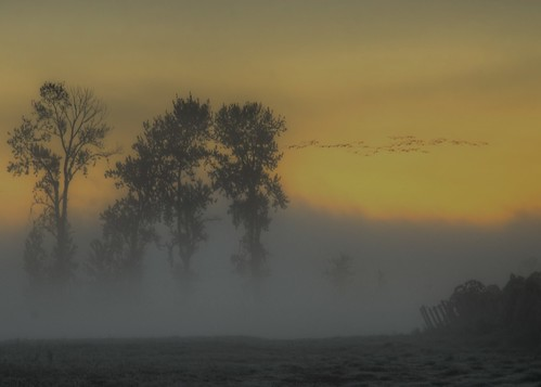 birds fog oregon sunrise landscape rising dawn geese glow moody shroud 1001nights sauvieisland morningmist resurrection tonemapped 1001nightsmagiccityrise