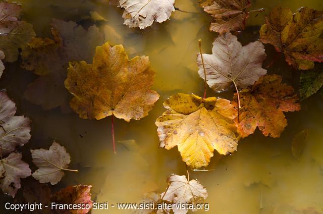 Si sta come d'autunno... (Riserva Naturale del Monte Alpe, Oltrepò Pavese)