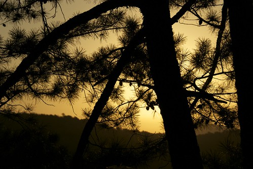 silhouette sunrise arkansas pinetrees hotsprings