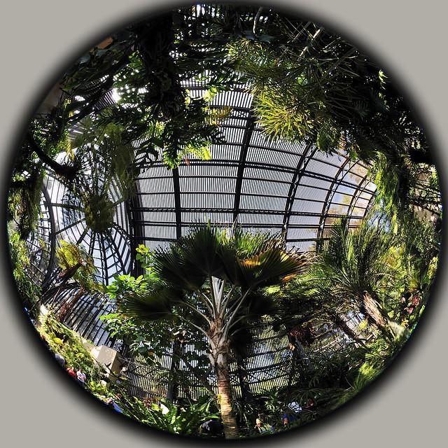 Fisheye Botanic Garden Balboa Park Nikon Nikkor 8mm F/2.8 2.8 Fisheye circular oct _005_ 2011