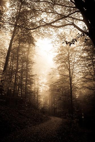 Herbstnebel | by Chez Eskay