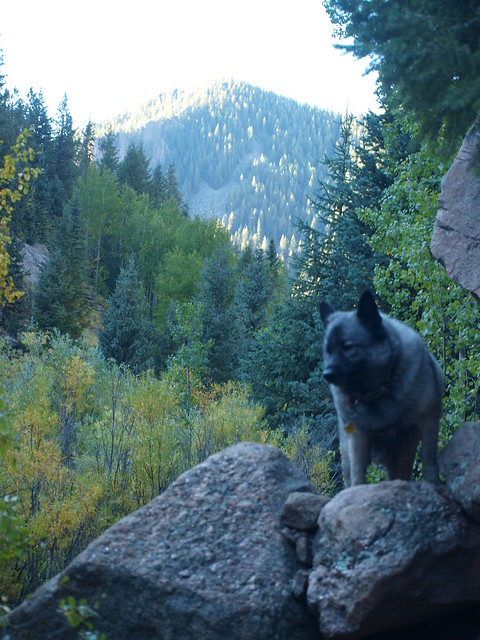 GRIZZLY, ELKHOUND AND TRAILBLAZER