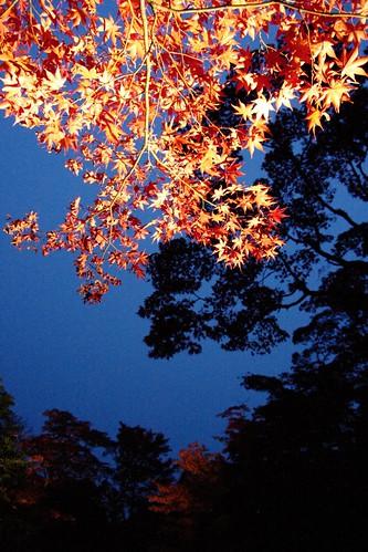 japan pentax illumination 日本 nikko tochigi 日光 輪王寺 k7 2011 栃木 イルミネーション ライトアップ ペンタックス 逍遥園 rinouji syoyoen