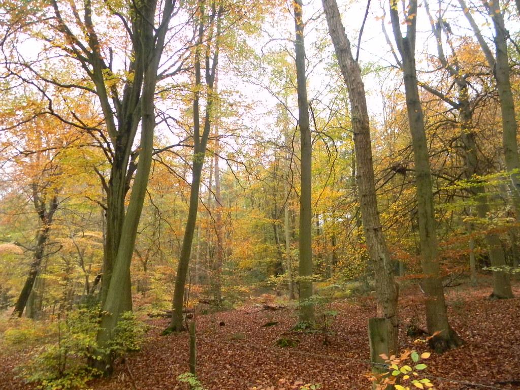 Autumn Colours 11 Princes Risborough to Great Missenden
