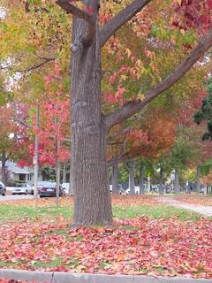 Autumn Leaves.1