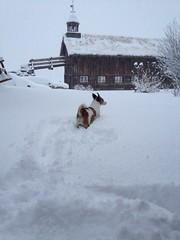 Jack in snow