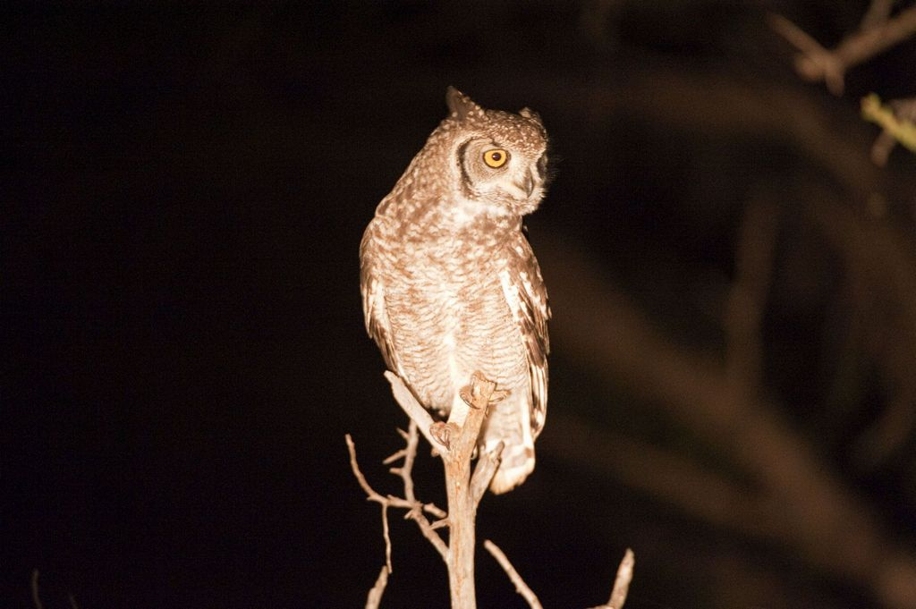 Image result for owl at night