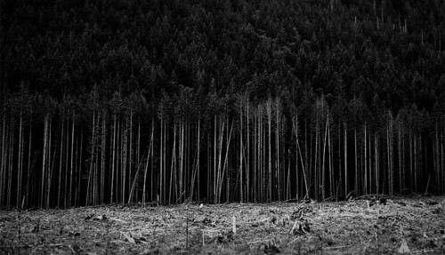 deforestation | by moonstream