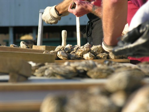 National Oyster Shucking Competition, St. Mary's Oyster Festival, St. Mary's County Fairgrounds