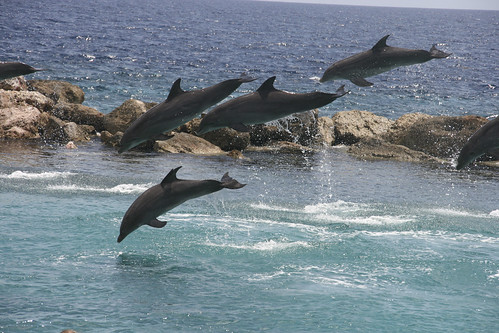 Curacao 2011 - Sea aquarium - Dolphins | by Anja Disseldorp