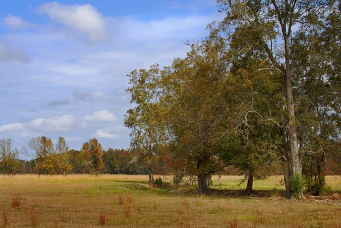 canonef28135mmf3556isusm 41mm trees tree seasons roadside nature louisiana landscape autumn pasture alongpiersrd mrgreenjeans gaylon gaylonkeeling
