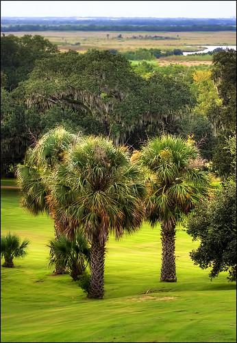trees plant louisiana factory sauce palm peppers tabasco newiberia marshhouse averyisland mcilhennyhouse