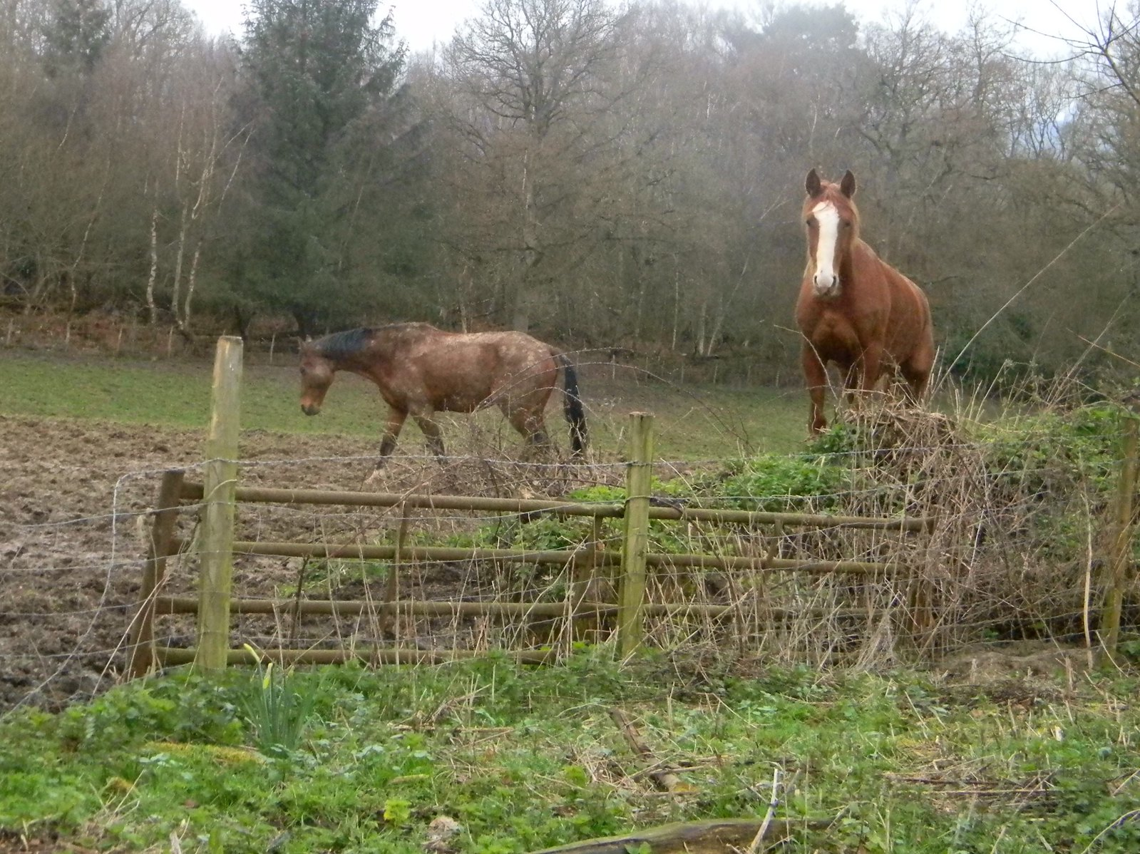 Horses in a field Champion the Wonder Horse again...is he following me? Cowden to Hever
