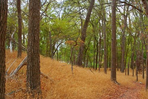 texas motherneffstatepark