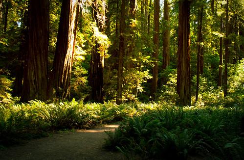 california park travel trees summer sunlight fern green nature forest landscape nationalpark flora hiking september adapter m42 canon350d flektogon redwood 20mm stoutgrove sequoia 2011 carlzeissjena 2820mm jedidiahsmith gettycandidate