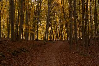 Waldweg   by Next.User