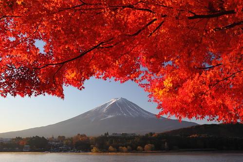autumn mountain lake fuji lakekawaguchiko
