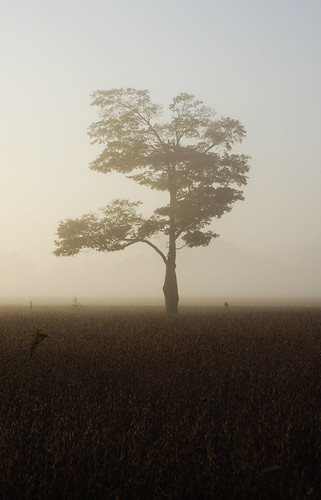 morning tree field silhouette fog sunrise early pentax sigma serengeti f28 kx 3570mm