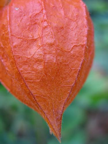 Natural orange | by miss_ikomi