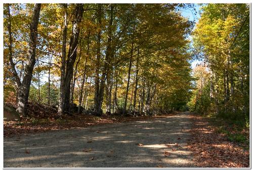 A Fall Scene   by Hari_Menon