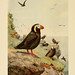 Alaskan bird-life as depicted by many writers. copy 1.