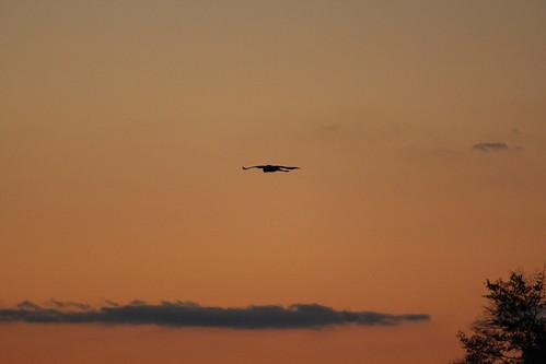 sunset lake bird landscape texas tx