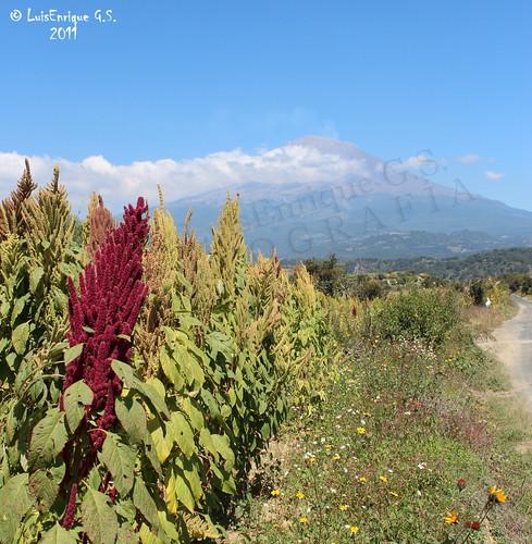 Volcán Popocatépetl  y Planta de Amaranto - Ruta de Evacuación a Tochimilco - Puebla - México