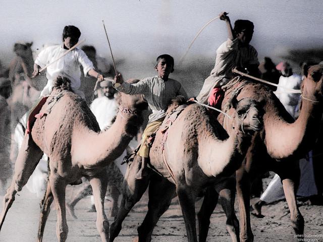 Seeb Camel Racing Oman
