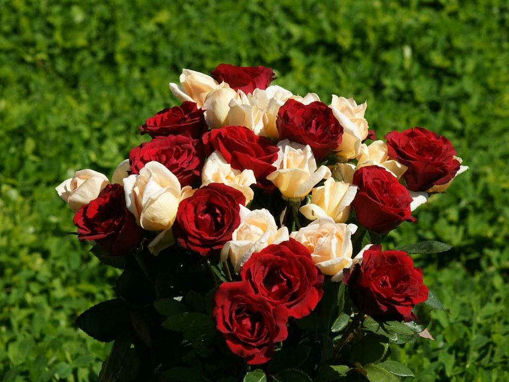 The Best Top Desktop Roses Wallpapers Hd Rose Wallpaper 21 Flickr