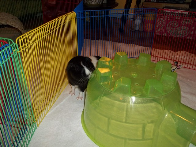 Meadow And Her New Igloo
