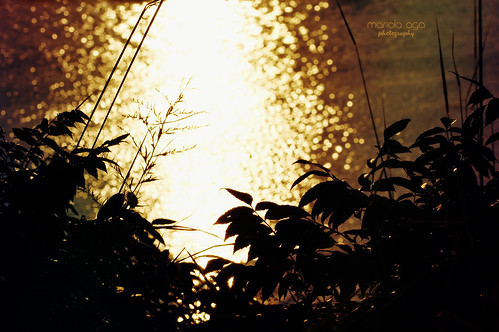 light sunset plants sunlight reflection water silhouette river golden evening bokeh surface filter tones effect thegalaxy