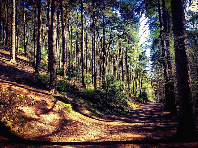 Lickey Hills country park summer 2015