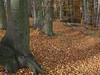 Podzimní les v okolí Starého Berštejna, foto: Petr Nejedlý