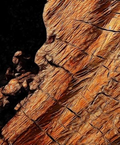 wood log grain hollow