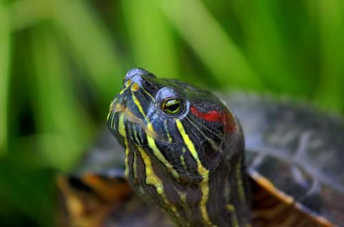 eye nature canon eos turtle natura ok 70200 ef przyroda marcin zółw 40d gawronski