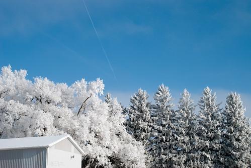 blue winter white snow cold tree ice fog landscape frozen frost hoarfrost icy frozenfog kalona