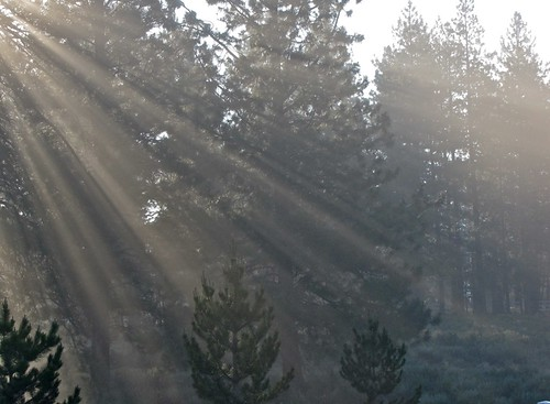 trees sun mist green fog forest sunrise woods rays llght