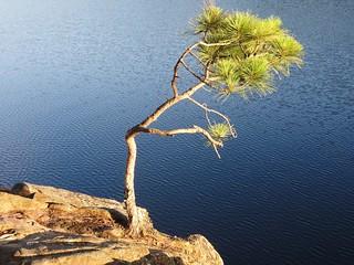 The tree: It's pretty no?