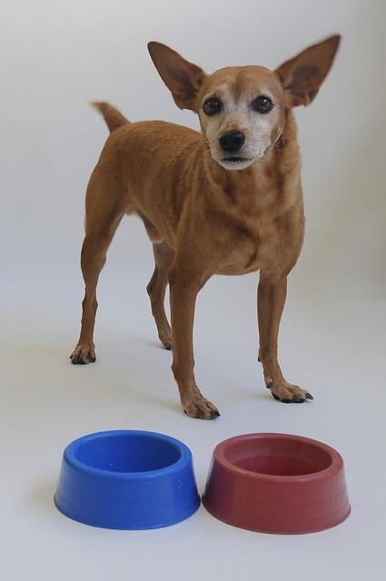 flickr's  dog