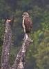 2257 Harpy Eagle by leehunterphotos