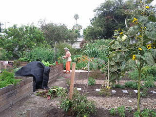 Raised Beds- The Learning Garden at Venice HS | by Veronica in LA