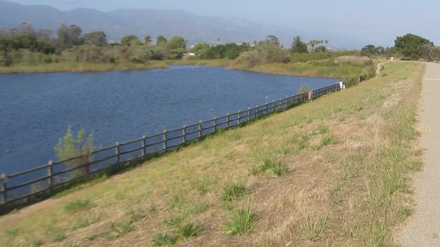 MVI_2089 eclipse mallards at lake los carneros