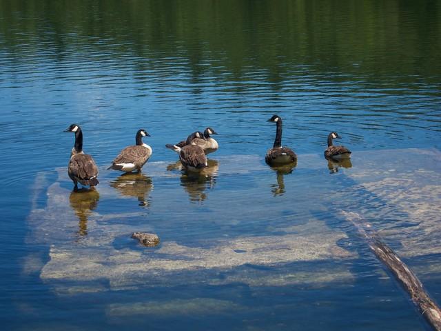 0:10:27 (10%): lebanon animal duck hiking newhampshire bostonlotlake bostonlot