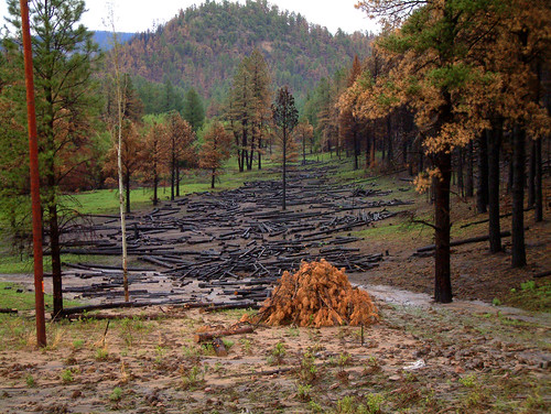 Burned Logs | by Apache-Sitgreaves National Forests