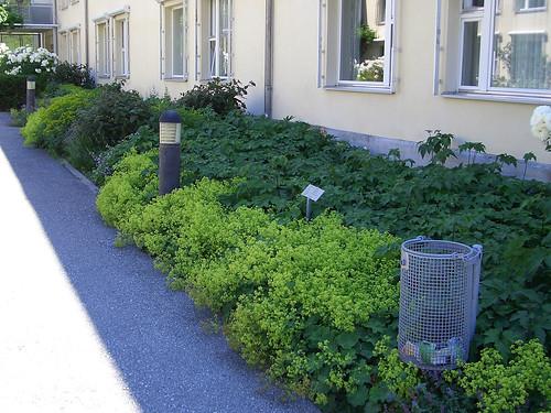 mymilla005 | by mymilla - biopool & garden