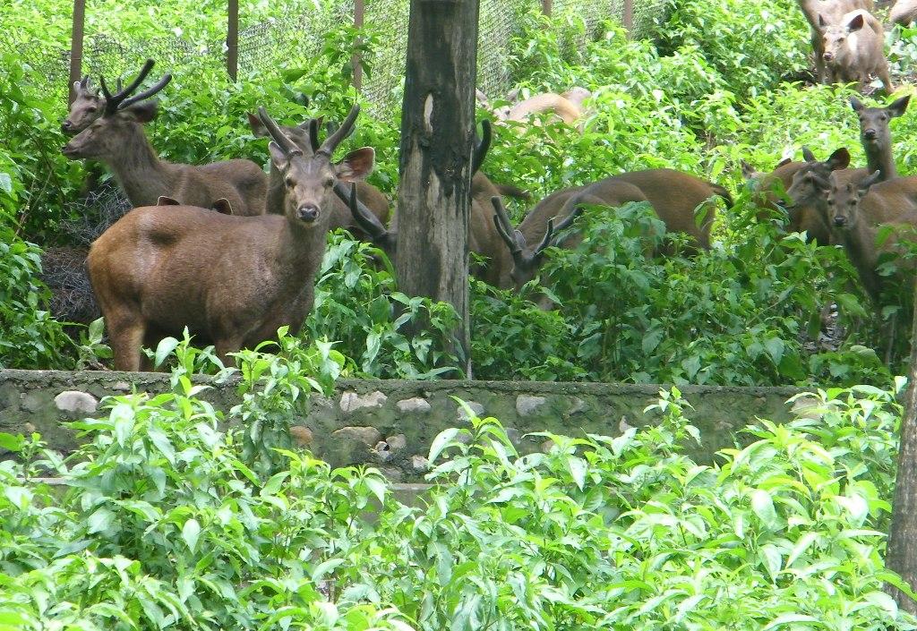 Renukaji Zoo/ Centaury near Lake | Renukaji Zoo/ Centaury ne
